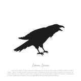Black crow silhouette on a white background. Raven isolated. Stock Photography