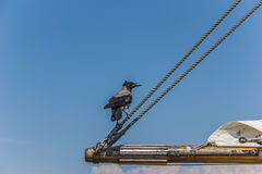 Black crow sitting on the boom of a sailboat Royalty Free Stock Photography