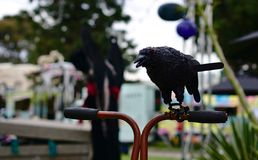 Black crow sitting on a handle bar royalty free stock photos