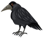 Black crow standing on white background. Illustration Stock Photos