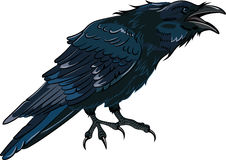 Black crow which caws. Isolated on white,  illustration, eps-10 Royalty Free Stock Photo