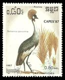 Black Crowned Crane, Balearica pavonina. Cambodia - stamp printed 1987, Multicolor Memorable issue of offset printing, Topic Birds and Philatelic Exhibitions Stock Photos