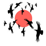 Black crows circling in the sun. Vector graphic image black crows circling in the sun Vector Illustration