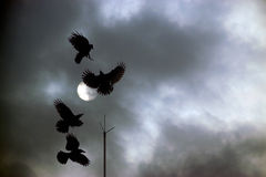 Black crows on a dark night Royalty Free Stock Photo