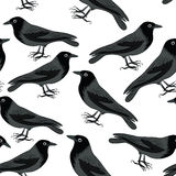 Black crows seamless pattern. Seamless pattern with black crows. Vector illustration on white background royalty free illustration