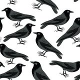 Black crows seamless pattern. Vector illustration on white background. Hand drawn black crows seamless pattern. Vector illustration on white background stock illustration