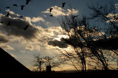 Black crows. Wind drives the clouds Stock Photography