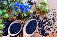 Free Black Cumin Field , Nigella Sativa Stock Photography - 153420732