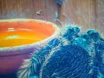 Black curly-hair tarantula (Brachypelma albopilosum), Birdeater Stock Images