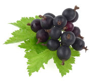 Black currant. Isolated on white Royalty Free Stock Photo