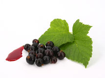 Black-currant Royalty Free Stock Photos