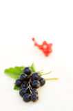 Black currant. Fresh black currants in the white bowl royalty free stock photo