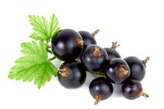 Black currant. Close-up of fresh black currant on white background Royalty Free Stock Images