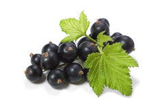 Black Currant. On white background Royalty Free Stock Image