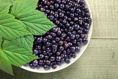 Black currant. Royalty Free Stock Photo