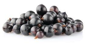 Black currant. On white background Stock Image
