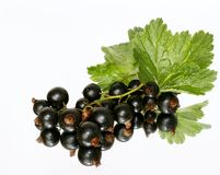 Black currant. Currant black  - fresh delicious  fruit Stock Photo