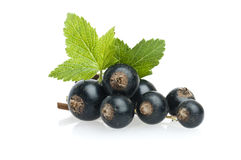 Free Black Currant Royalty Free Stock Photography - 37004057
