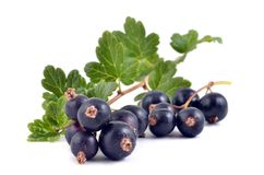 Black currant. On the white background Royalty Free Stock Images