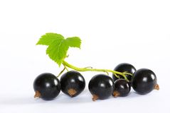 Black currant Stock Image