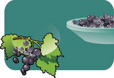 Black-currant. Vector color illustration of a blackberry.  The vector file is in AI-EPS8 format Royalty Free Stock Image