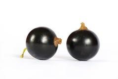 Black currant Royalty Free Stock Photo