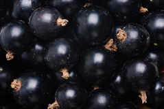 Black currant as fine food Stock Photography