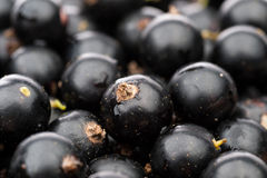 Black currant background Royalty Free Stock Photos