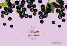Black currant banner. Stock Images