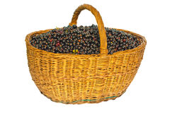Black currant in a basket. Black currant in a wattled basket on a white background Stock Photography