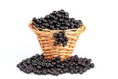 Black currant in a basket Stock Photos