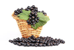 Black currant in a basket Stock Images