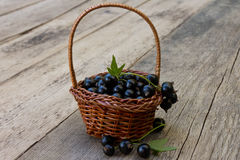 Black currant in a basket closeup Royalty Free Stock Photos