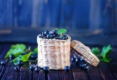 Black currant Stock Photos