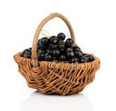 Black currant berries Stock Images