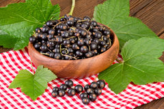 Black Currant Berries  on red checkered tablecloth Stock Images