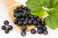 Black currant berries Royalty Free Stock Photo