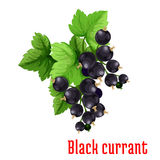 Black currant berries vector icon Stock Photography