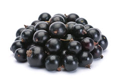 Black currant berry Stock Image