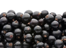 Black currant berry Stock Photography