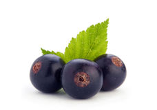 Black currant berry Royalty Free Stock Photos