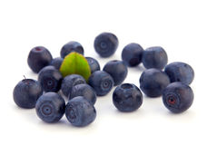Black currant berry Stock Images