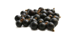 Black Currant Berry Stock Photos