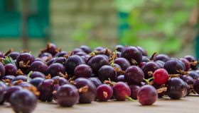 Black currant berry background. A lot of black currant Stock Image