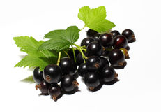 Black currant berry. Close up  on white background Stock Photography
