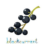 Black Currant Berry Stock Photo
