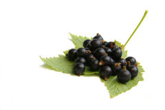 Black currant berry on leaf Stock Images