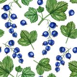 Black currant berry seamless pattern isolated on white background, hand drawn paint illustration, herbal decorative vector illustration