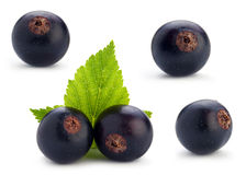 Black currant berry set Stock Photos
