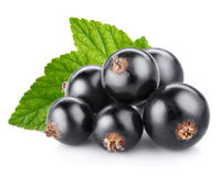 Black currant. Berry  on white Royalty Free Stock Photo